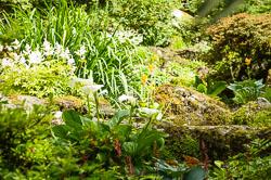 Bodnant Gardens, 2016-06