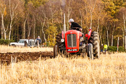 Massey Ferguson MF35 at Sherwood Ploughing Match, Budby, Notinghamshire, November 2017. Photo: Neil Houltby