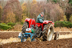 Massey Ferguson MF148 at Sherwood Ploughing Match, Budby, Notinghamshire, November 2017. Photo: Neil Houltby