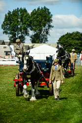 Heavy Horse Single Trade and Agricultural at Lincolnshire Show, Lincolnshire Showground, Lincolnshire, June 2018. Photo: Neil Houltby