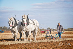 Horse Ploughing at Barton Upon Humber Ploughing Tournament, Worlaby Top, Lincolnshire, October 2018. Photo: Neil Houltby