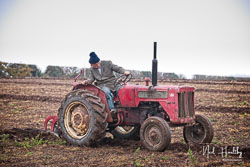 McCormick International B275 at Sherwood Ploughing Match, Budby, Nottinghamshire, November 2018. Photo: Neil Houltby