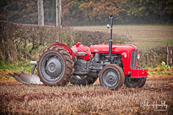Massey Ferguson MF35 at Sherwood Ploughing Match, Budby, Nottinghamshire, November 2018. Photo: Neil Houltby