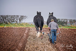 Horse and Plough at Sherwood Ploughing Match, Budby, Nottinghamshire, November 2018. Photo: Neil Houltby