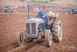 Ferguson TE20 at Sherwood Ploughing Match, Budby, Nottinghamshire, November 2018. Photo: Neil Houltby