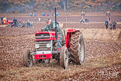 Massey Ferguson MF148 at Sherwood Ploughing Match, Budby, Nottinghamshire, November 2018. Photo: Neil Houltby