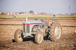 Ferguson TE-20 at Newborough Plouging Match, Newborough, Cambridgeshire, February 2019. Photo: Neil Houltby