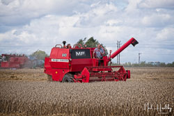 Massey Ferguson 240 Combine at Gathering the Harvest, East Bridgeford, Nottinghamshire, August 2019. Photo: Neil Houltby