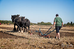 Horse and Plough at Collingham Show, Collingham, Nottinghamshire, September 2019. Photo: Neil Houltby