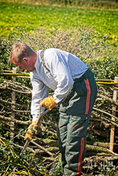 Hedge Laying at Collingham Show, Collingham, Nottinghamshire, September 2019. Photo: Neil Houltby
