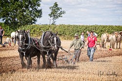 Horse and Plough at North Notts Ploughing Match, Blyth, Nottinghamshire, September 2019. Photo: Neil Houltby