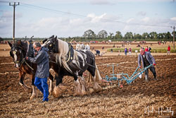 Horse Plough at British National Ploughing Championship, Nocton, Lincolnshire, October 2019. Photo: Neil Houltby