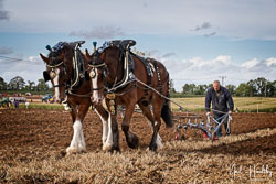 Sid and Sam Horse Plough at British National Ploughing Championship, Nocton, Lincolnshire, October 2019. Photo: Neil Houltby