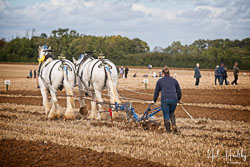 Angle and Bravelad Horse Plough at British National Ploughing Championship, Nocton, Lincolnshire, October 2019. Photo: Neil Houltby